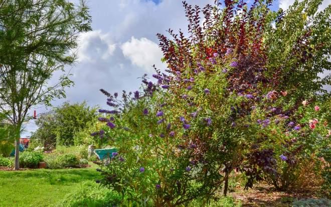 garden_dsc_0456