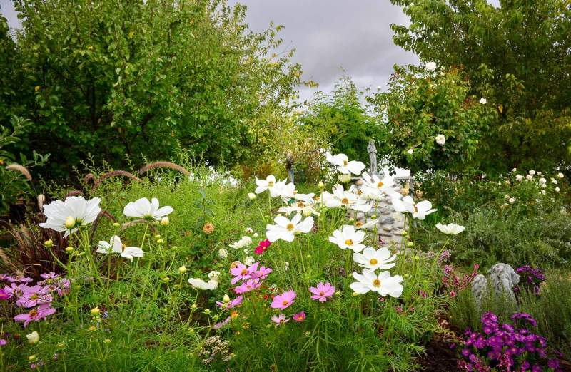 garden_fall_dsc_0482