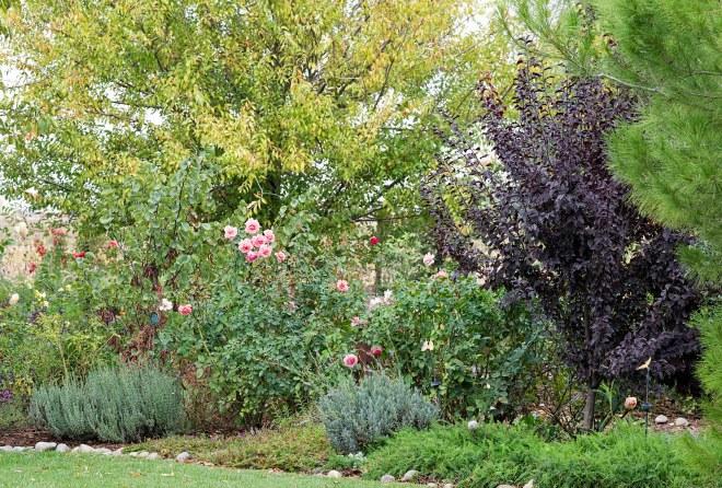garden_fall_dsc_2820