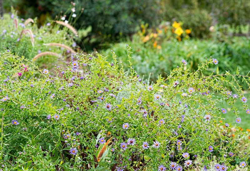 garden_fall_dsc_2824