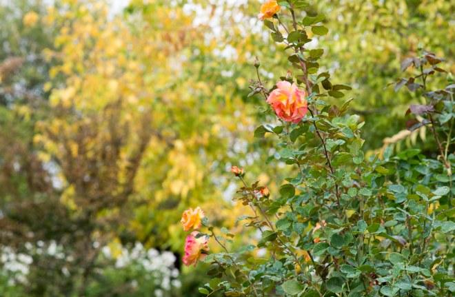 garden_fall_dsc_2830