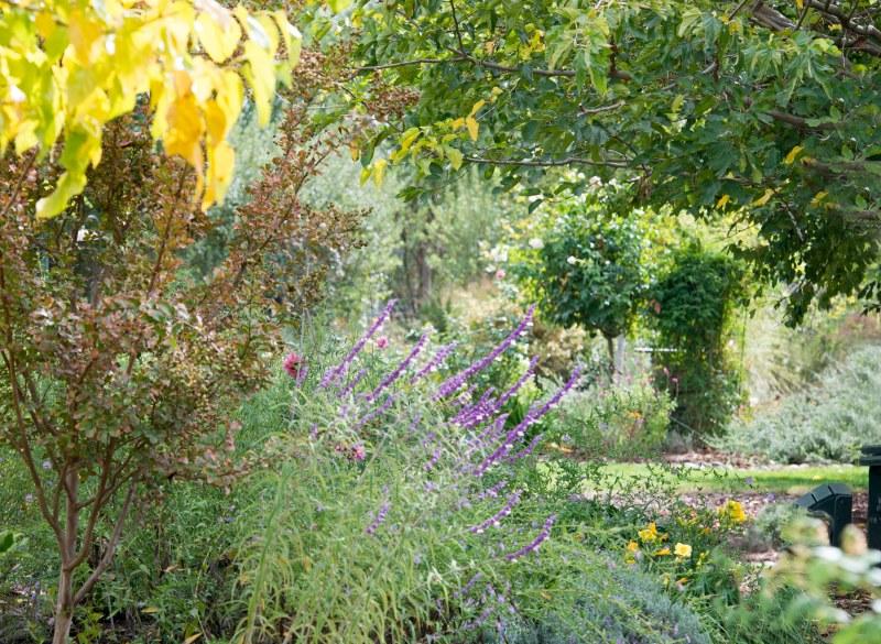 garden_fall_dsc_2923