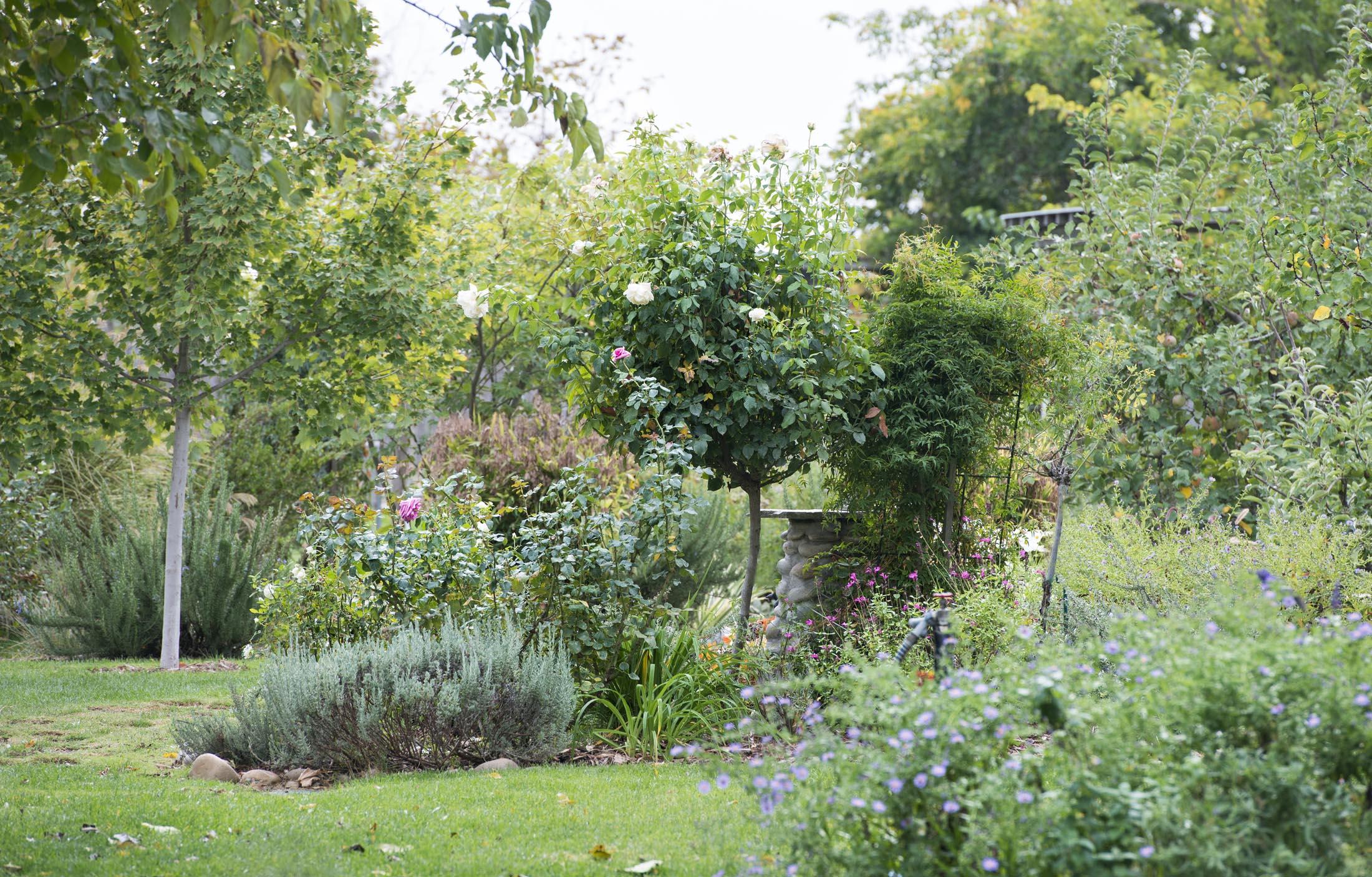 garden_fall_dsc_2925
