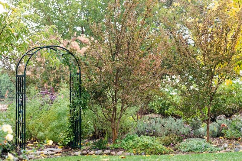 garden_fall_rain_dsc_2928