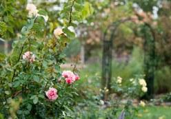 garden_fall_rain_dsc_2929