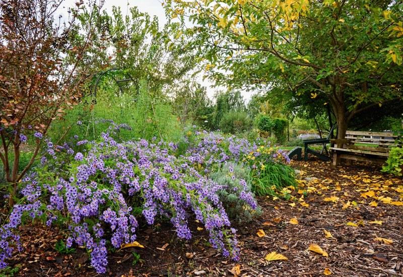 garden_rain_dsc_0659
