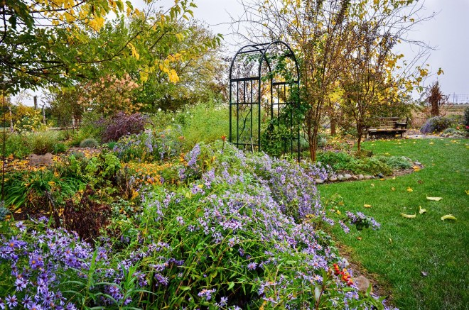 garden_rain_dsc_0663