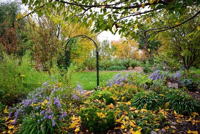garden_rain_dsc_0665