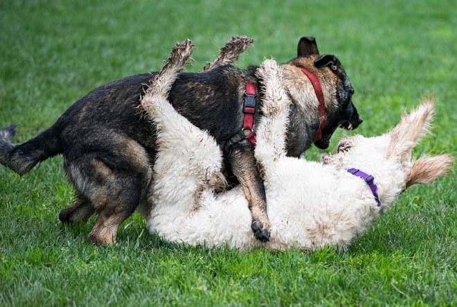 grt_muddy-dogs_dsc_3496
