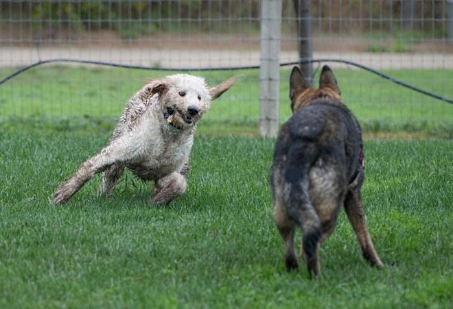 grt_muddy-dogs_dsc_3513