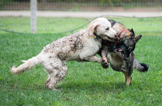 grt_muddy-dogs_dsc_3518