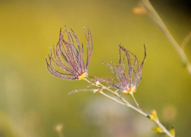 pink-flower_sedona_dsc_1352