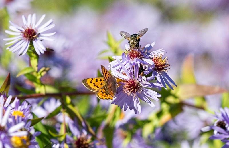 butterfly_fly_dsc_3556