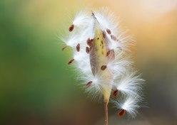 seeds_dsc_2796
