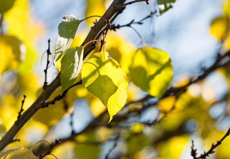 fall_leaf_dsc_4449