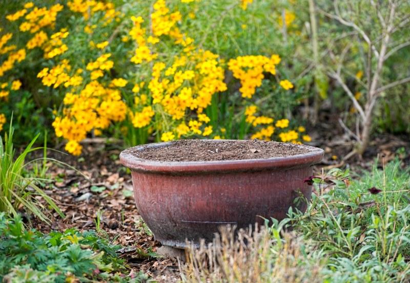 garden-_-fall_dsc_4494