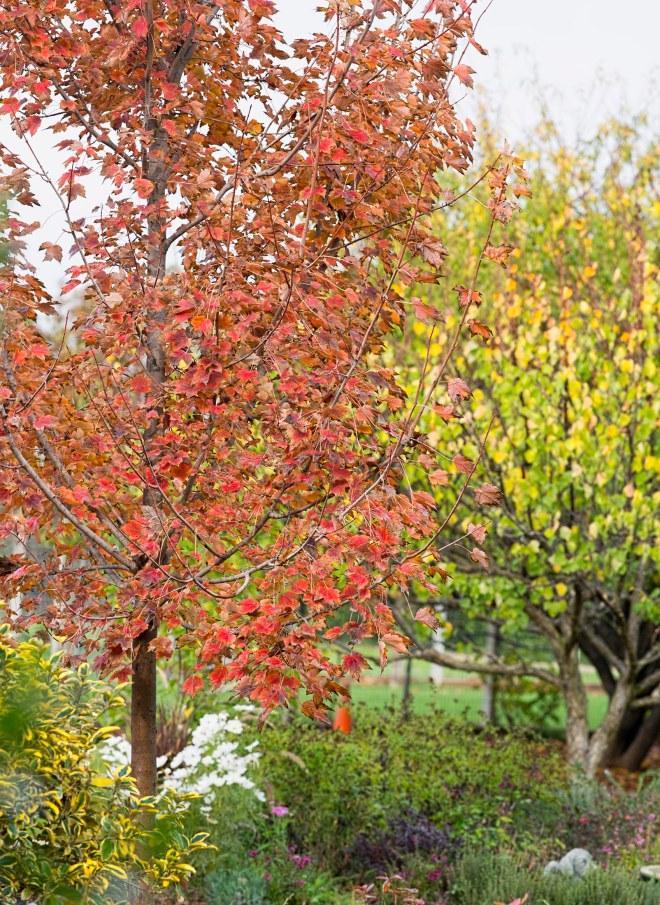 garden_fall_dsc_4342