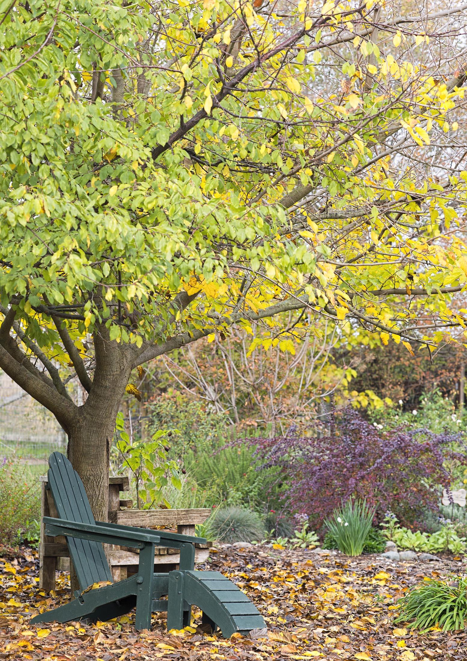 garden_fall_dsc_4345