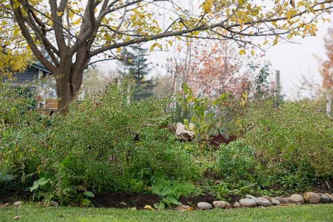 garden_fall_dsc_4492