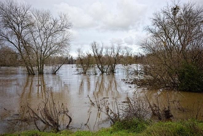 flood_river_dsc_0894