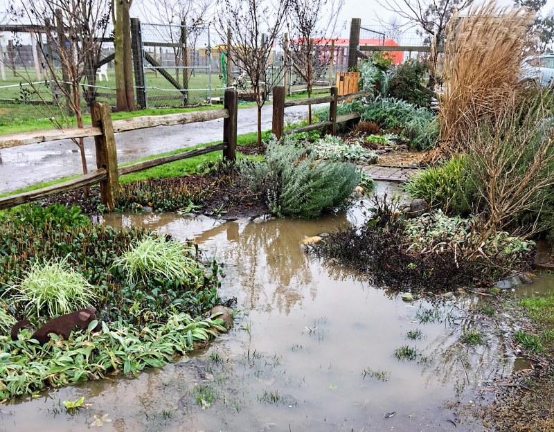 garden_flood_img_1045