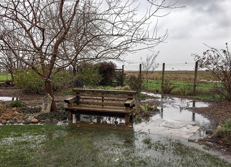 garden_flood_img_1046