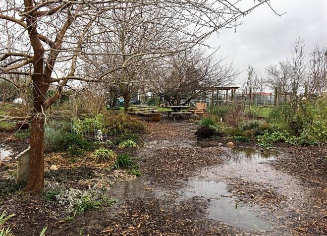 garden_flood_img_1047