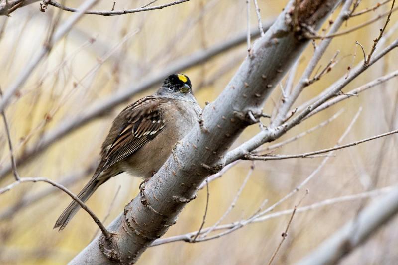sparrow_dsc_5343