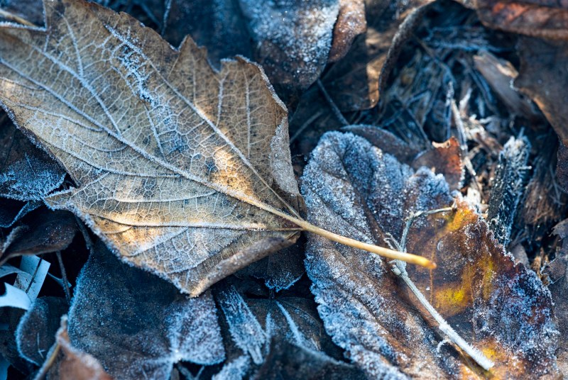 winter_leaves_frost_dsc_5117