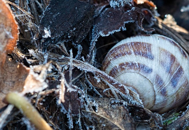 winter_snail_frost_dsc_5114
