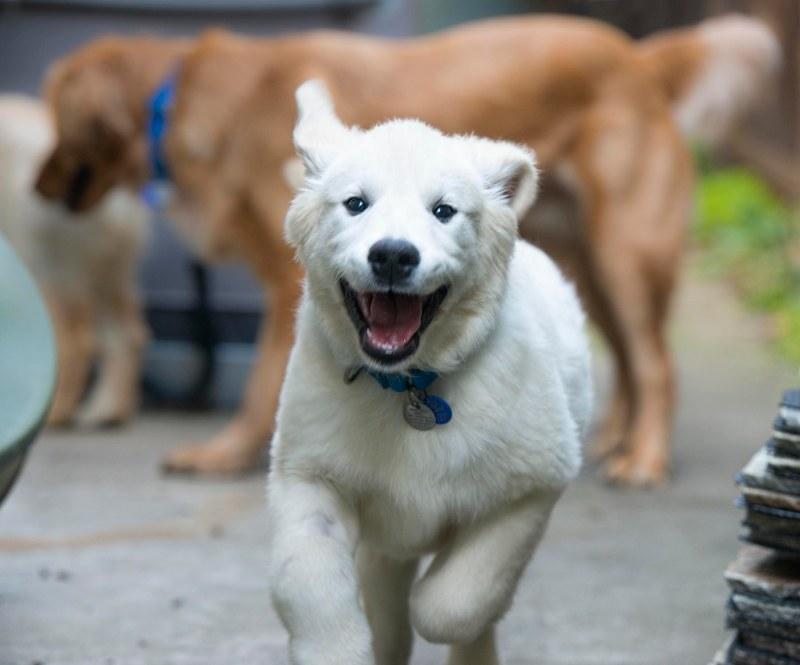 puppy_dsc_6487