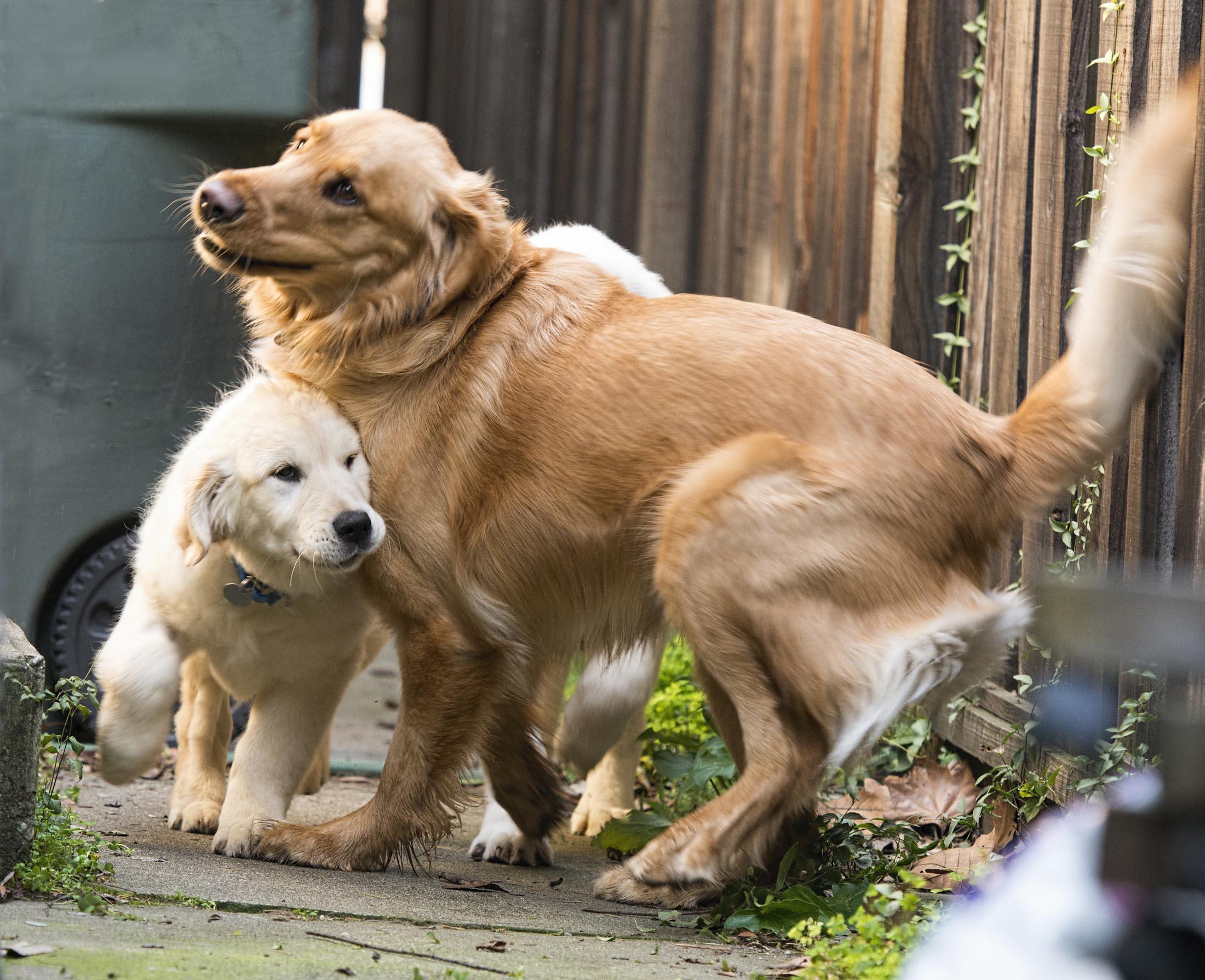 yogi_puppy_dsc_6473
