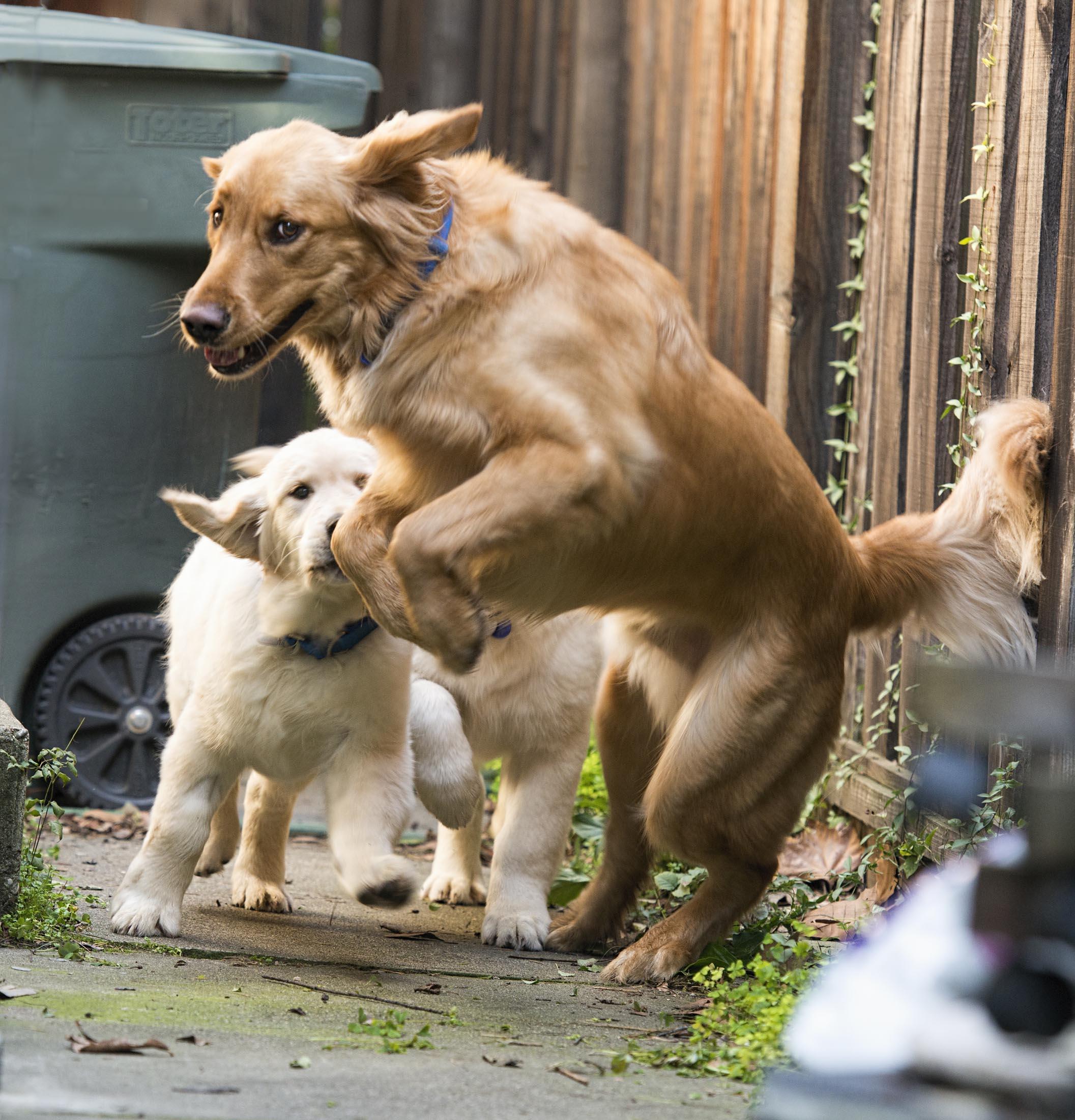 yogi_puppy_dsc_6474