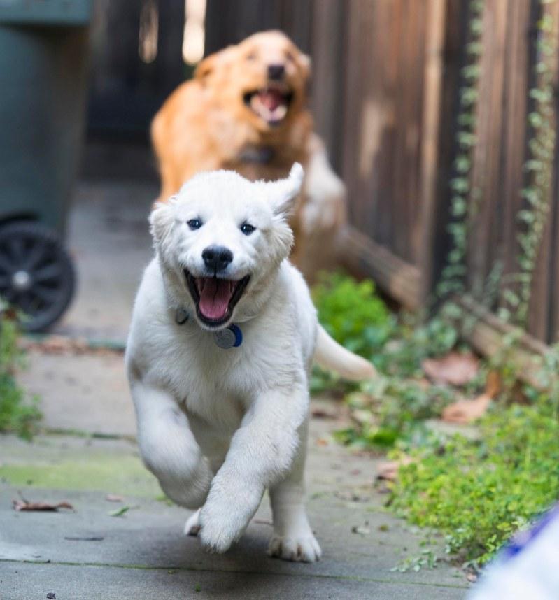 yogi_puppy_dsc_6506