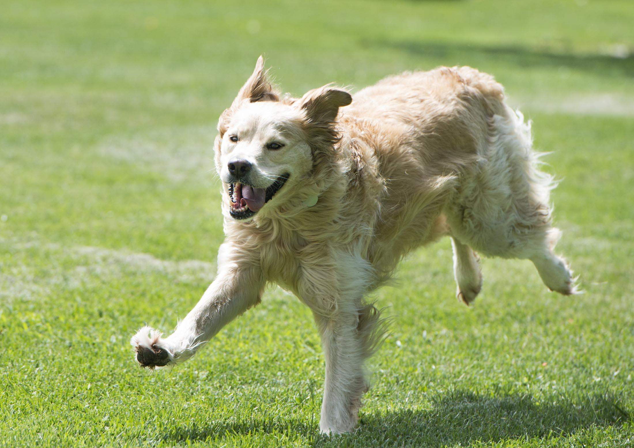 Companion Dog Training Boise
