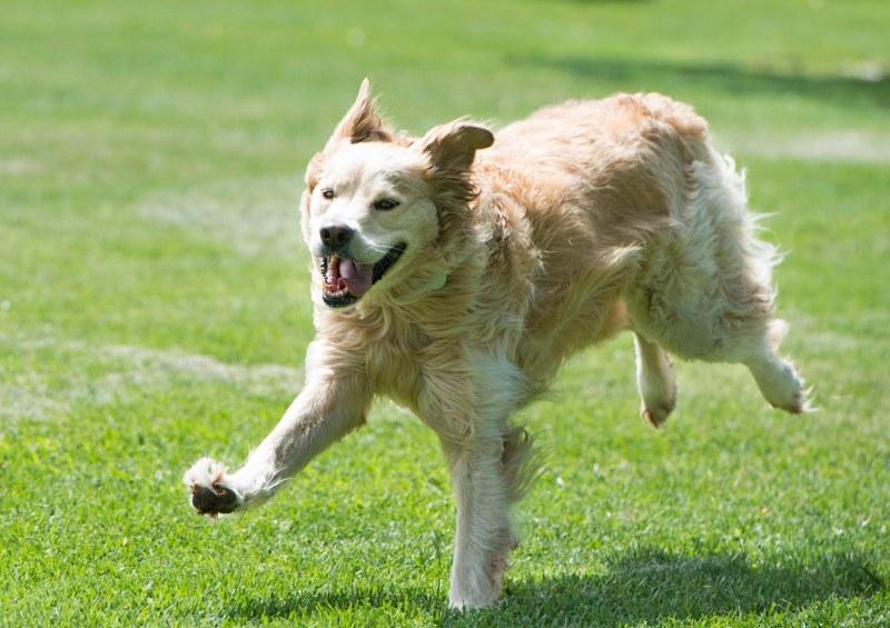 Service Dog Success Stories
