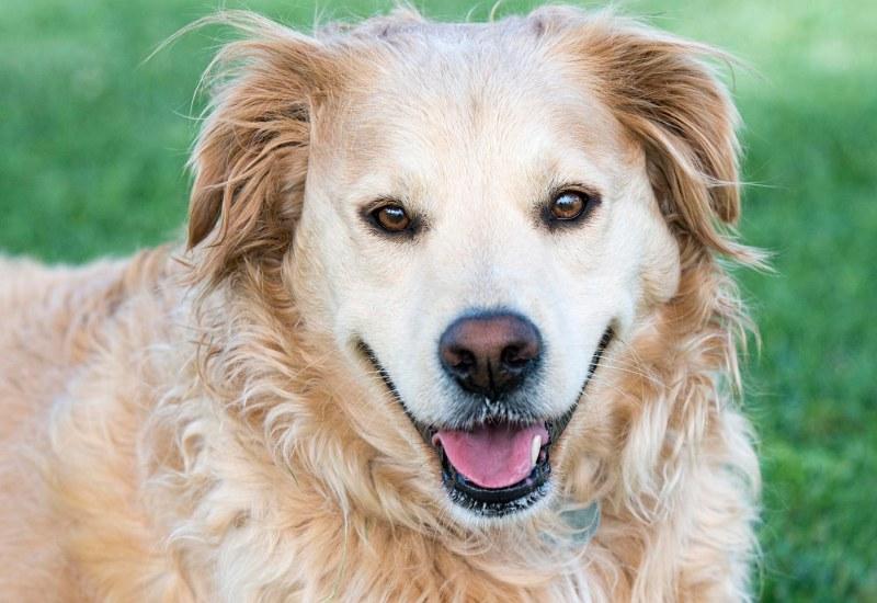 Support Dog Training Worden Il