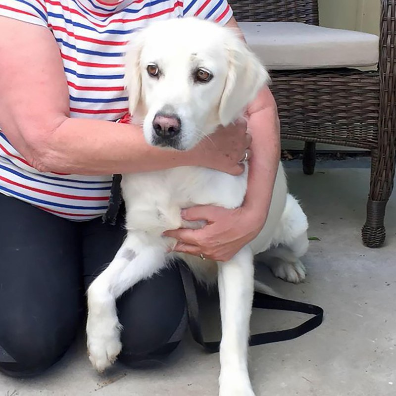 Adopted Dog Fearful