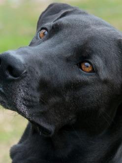Dog Rescue Oliver