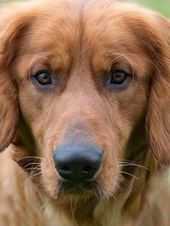 Soul Dog Rescue Denver