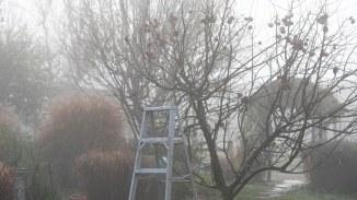 Fog_Apple Tree_DSC_4980