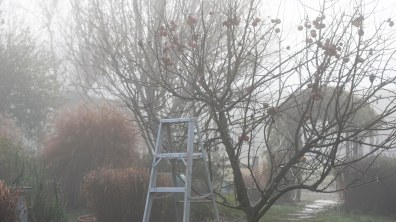 Fog_Apple Tree_DSC_4980