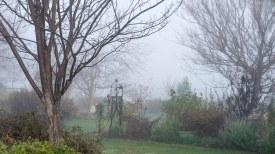 Garden_Fog_DSC_4985