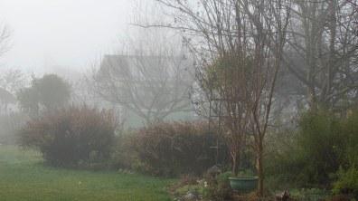 Garden_Fog_DSC_4997