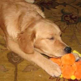 Jackson Puppy