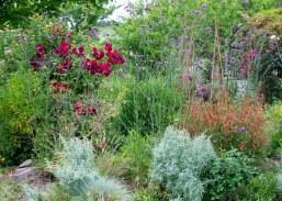Garden_May_DSC_9082