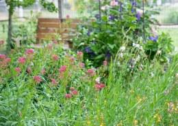 Garden_May_DSC_9097