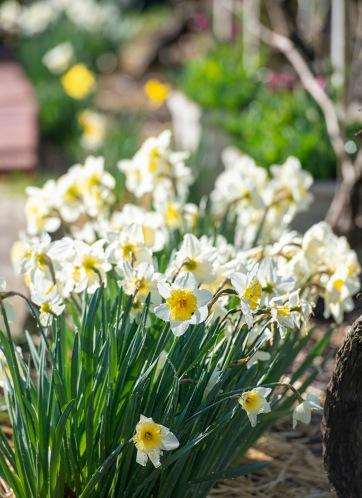 Garden_Spring_DSC_4701
