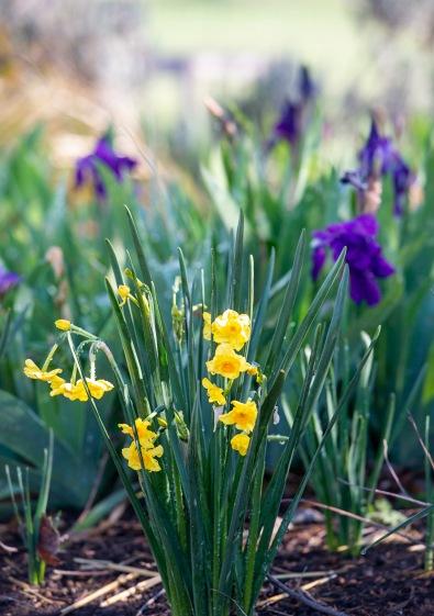 Garden_Spring_DSC_4703
