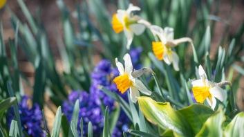 Garden_Spring_DSC_4837